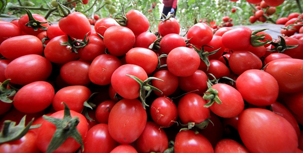 Legume tratate cu 'bondari' la Buzau, in locul pesticidelor