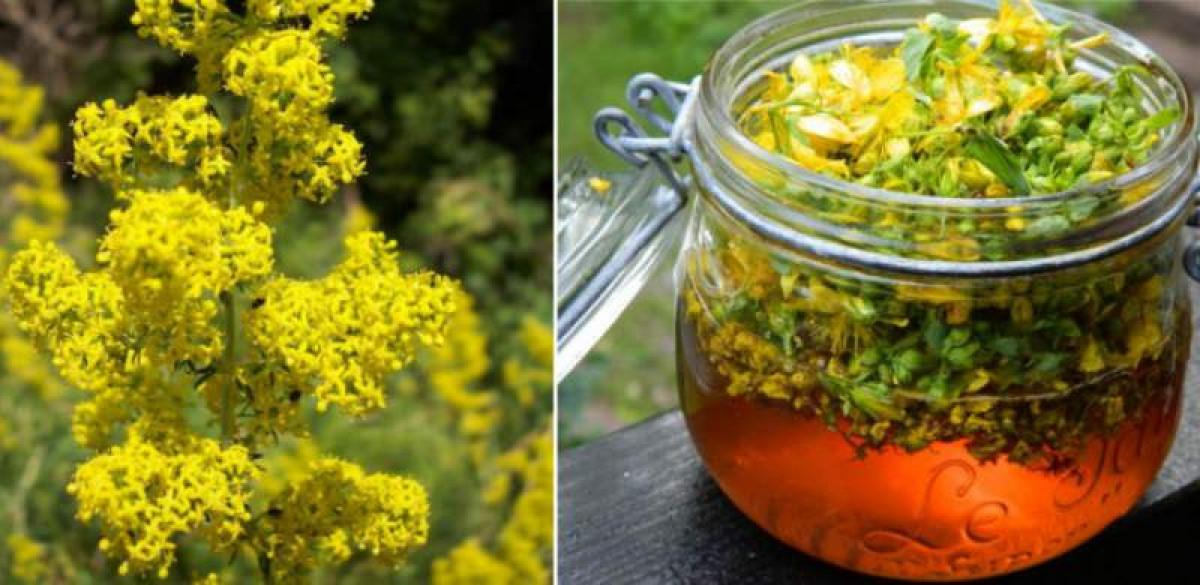 Ceaiul de flori de sanziene, leac magic pentru bolile de ficat. Cum se consuma